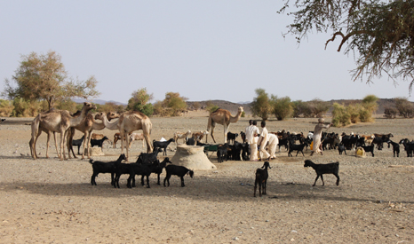 Pastoralist and farming communities in the Sahel have been hit by recurrent droughts (Source: Flickr/SOS Sahel UK)