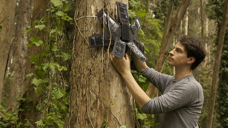 Smartphone devices are hidden in the trees, where they detect sounds of chainsaws (Pic: Rainforest Connection)