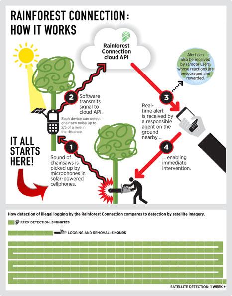 Pic: Rainforest Connection
