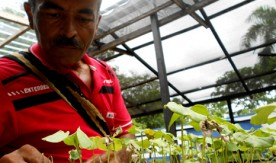 Cocaine wars to climate crisis: can fortified crops save Colombia?