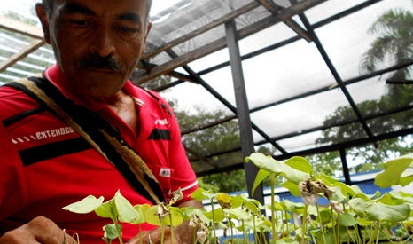 Farmer Luiz Tiberio Gutierrez tends his plants