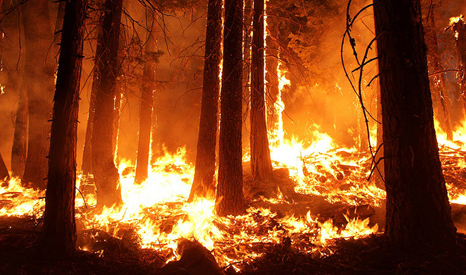 A 2013 fire in the Stanislaus National Forest near in California (Pic: US Department of Agriculture)