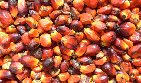Palm oil is used in thousands of food and cosmetic products (Pic: flickr/onevillage initiative)