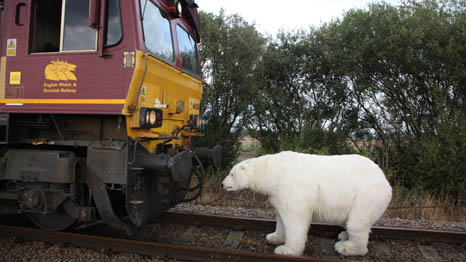 A model polar bear symbolises the victims of climate change (Pic: Greenpeace)
