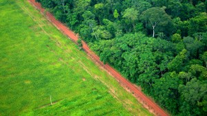 EU moots crackdown on deforestation through supply chains