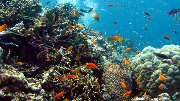 Labor made an election pledge to protect the Great Barrier Reef (Pic: Flickr/Richard Ling)