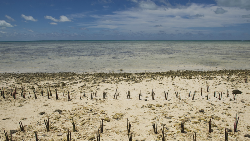 Around half of the GCF's funds will go to helping countries prepare for future climate impacts (Pic: UN Photos)