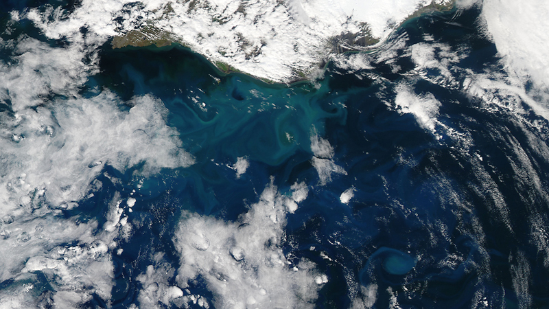 A spring bloom of phytoplankton in the Atlantic Ocean off Iceland captured by NASA in June 2014 (Pic: NASA/Jeff Schmaltz)