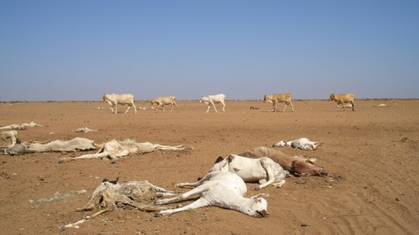Greening Africa's deserts could stem tragic tide of migrants