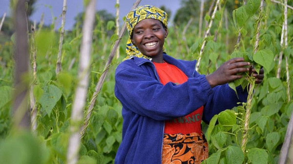 Agriculture in Rwanda (Pic: CIAT/Flickr)