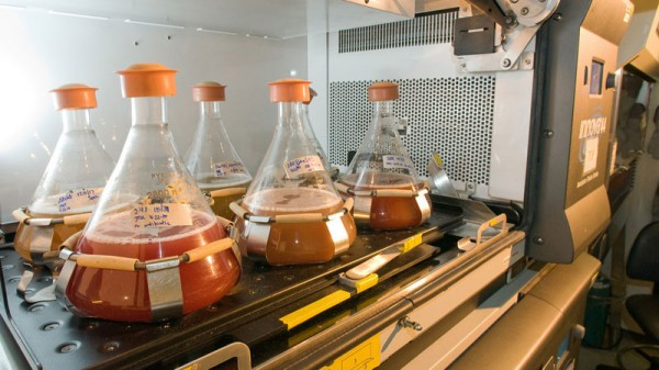 Biofuel testing (Pic: Argonne National Laboratory/Flickr)