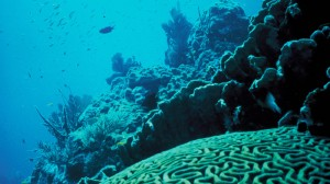 Scientists to deploy ocean cameras as acidification fears mount
