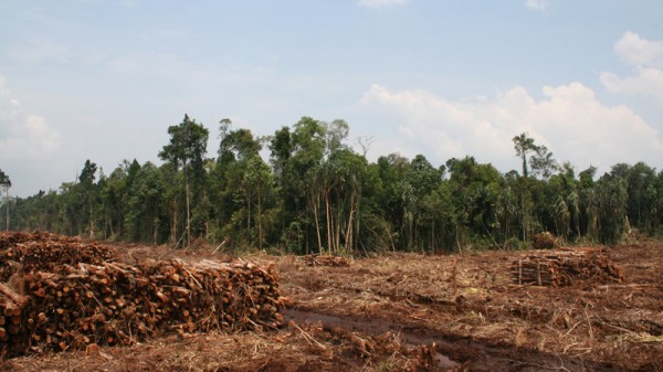 Forests are valuable carbon sinks (Pic: Flickr/Rainforest Action Network)