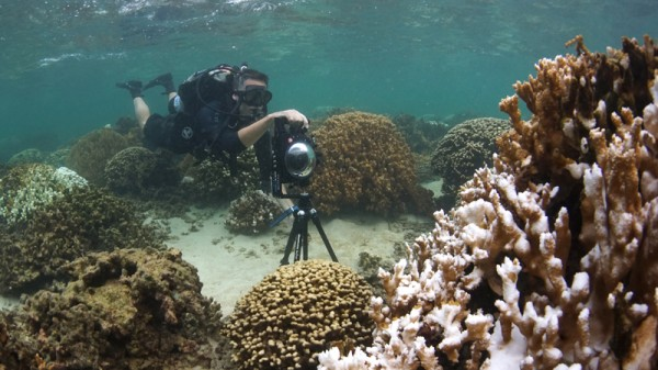 Richard Vevers, director of the Catlin Seaview Survey photographs coral bleaching using a 360 degree panoramic camera (Pic: Catlin Seaview Survey)