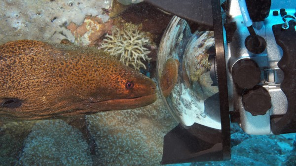A Moray eel looks at his reflection (Pic: Catlin Seaview Survey)