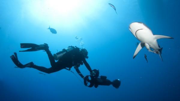 (Pic: Catlin Seaview Survey)