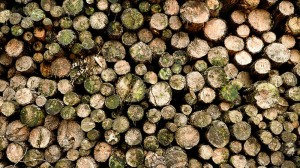 Pakistan plans special force to protect forests from timber mafia