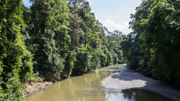 East Asia pollution seeps into the heart of Borneo's rainforest