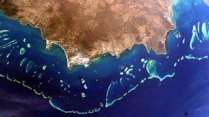 Australian government 'can't be trusted to protect Great Barrier Reef'