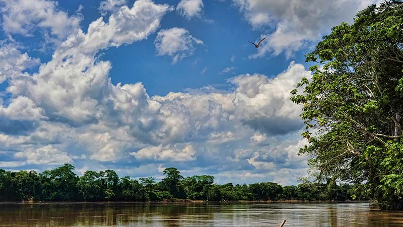 Peru's Madre de Dios reserve is at risk from the railroad plans (Flickr/ Richard Vignola)