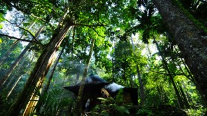 Russia, Canada, Brazil record vast forest loss