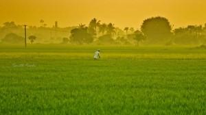 Indian heatwave deaths blamed on global warming