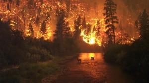 Canada, Alaska wildfire surge sends smoke plume to Texas