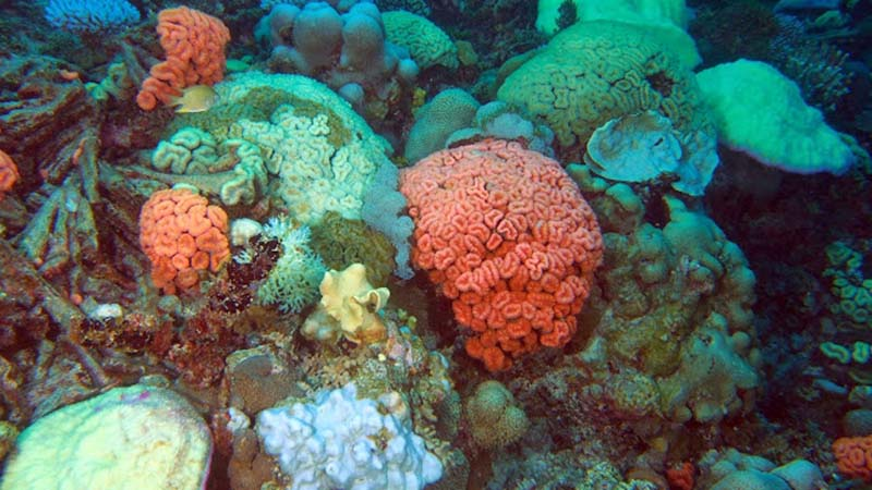 "Bruckner described the corals as ""coloured popcorn"" (credit: )"