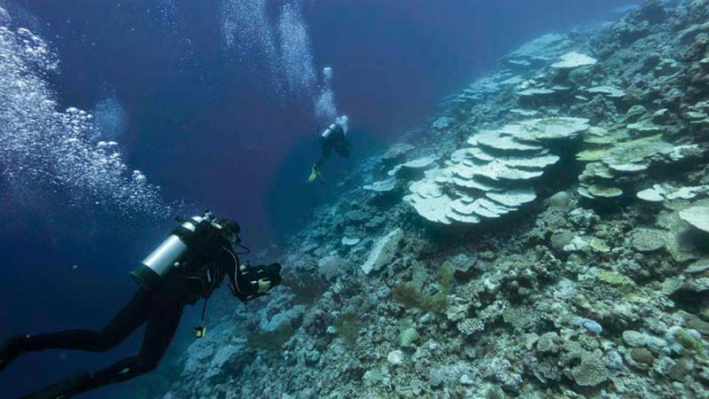 Divers survey the extent of bleaching in the Chagos archipelago (Credit: Living Oceans Foundation)