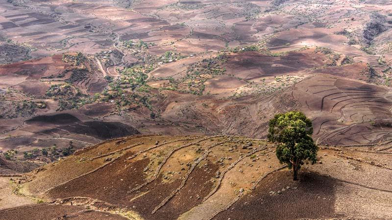 Unpredictable rains linked to climate change impact Ethiopian agriculture (Flickr/ Mariusz Kluzniak)