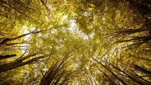 US, EU fall flat on cutting forest emissions