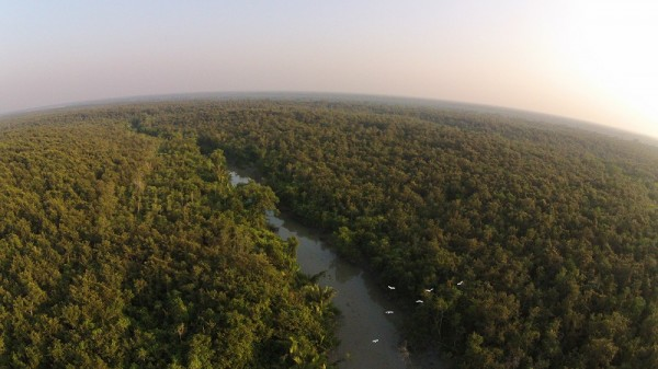 The Sundarbans are the world's biggest mangrove forest, spanning the coastline of India and China (Wikimedia Commons)