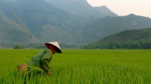 Vietnam mulls climate pledge to UN pact
