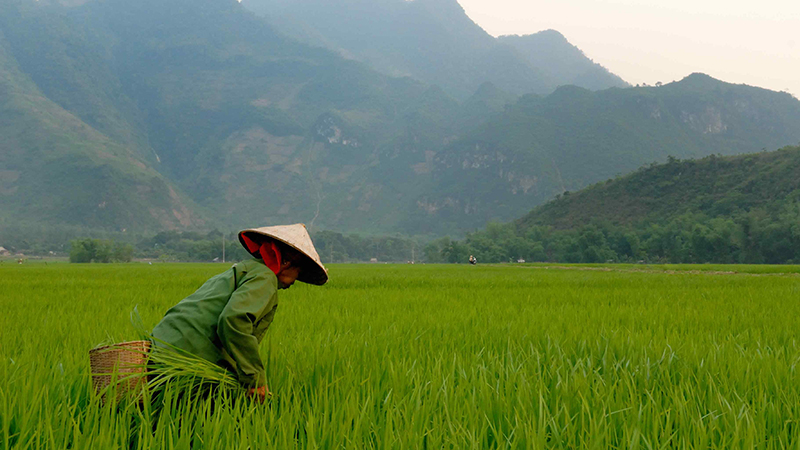 An agriculture worker in Vietnam (Flickr/ MM)