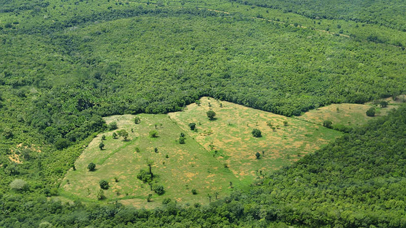 Aerial view of the Amazon Rainforest, near Manaus, Amazonas state (Flickr/ CIAT)