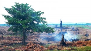 APP touts Indonesia peat project as climate exemplar
