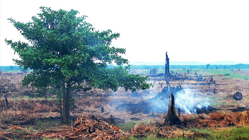 Cleared peatland, Indonesia (Flickr/CIFOR)