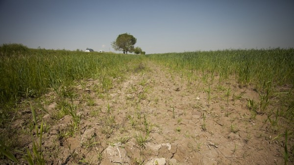 Degraded land in Uzbekistan (Flickr/IFPRI -IMAGES)