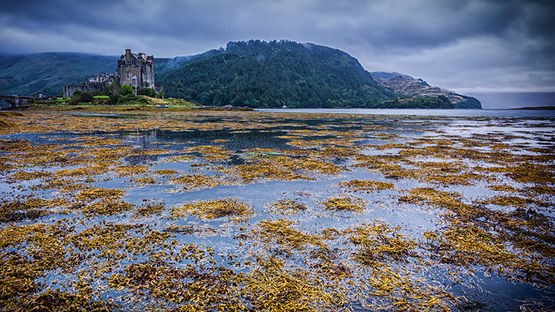 (Flickr/ Andi Campbell-Jones) The Seaweed  Eilean Donan Castle in Scotland)