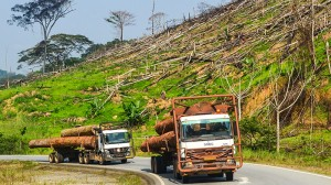 Small forest users can outcompete agribusiness - study