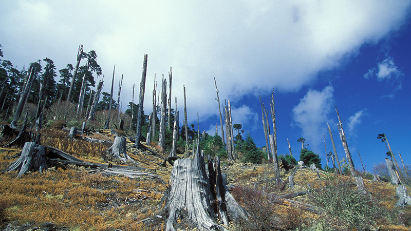 Deforestation in Bhutan. Forests are vital stocks of carbon and water resources (Flickr/ World Bank)