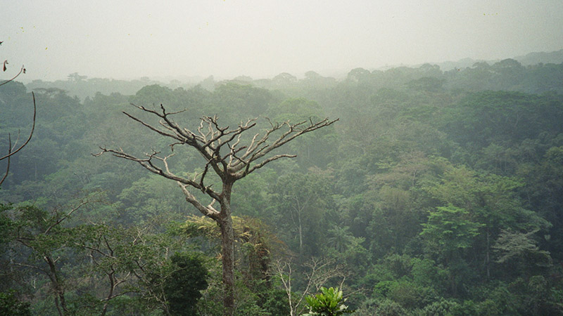 Commercial logging and farming expansion has made the Congo rainforest one of the world's most endangered ecosystems (Flickr/ rizzr)