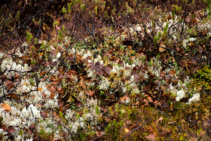 [pic 3. The tundra is really rich and colorful even though it's now that weird time between its two best seasons. Fall, that is]