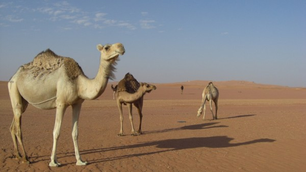 Algeria is severely affected by desertification (Flickr/albatros11)