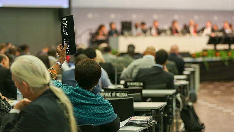 South Africa raises their placard to speak during the session (credit: IISD)
