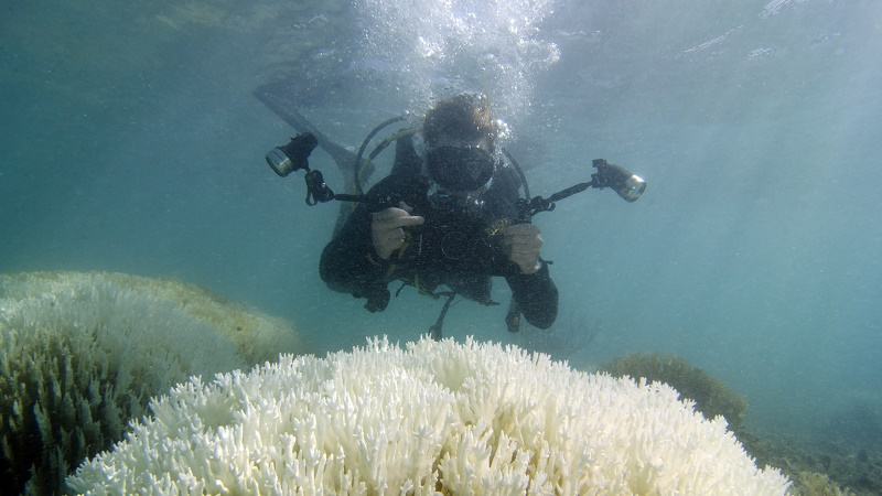 A scientist assesses the damage (Pic: XL Catlin Seaview Survey)