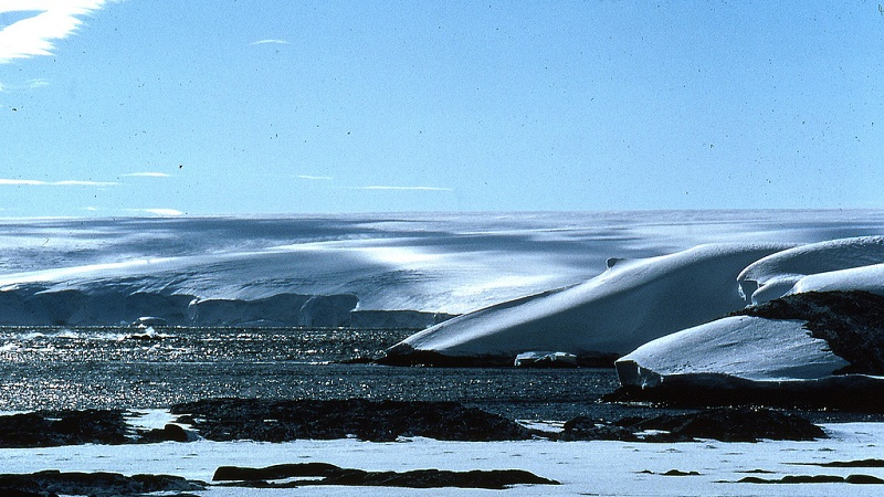 (Flickr/Antarctic and Southern Ocean Coalition)