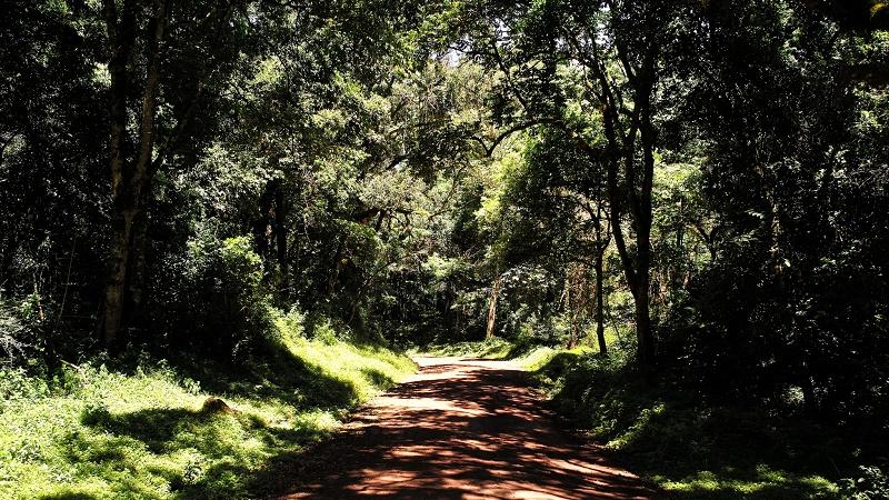 Arusha National Park, Tanzania (Flickr/Roman Boed)