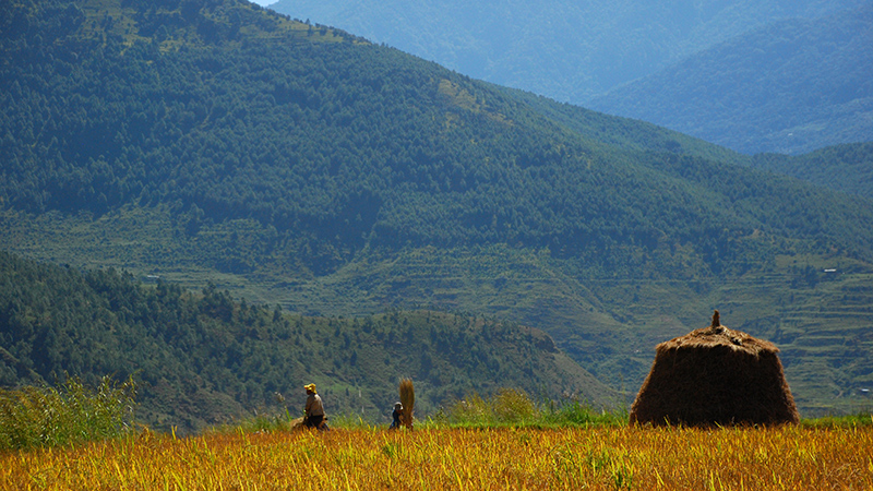 Farmers thresh their rice harvest in Bhutan. Adaptation cash could fund drought-resistant crops as the planet warms (credit: UN photo)
