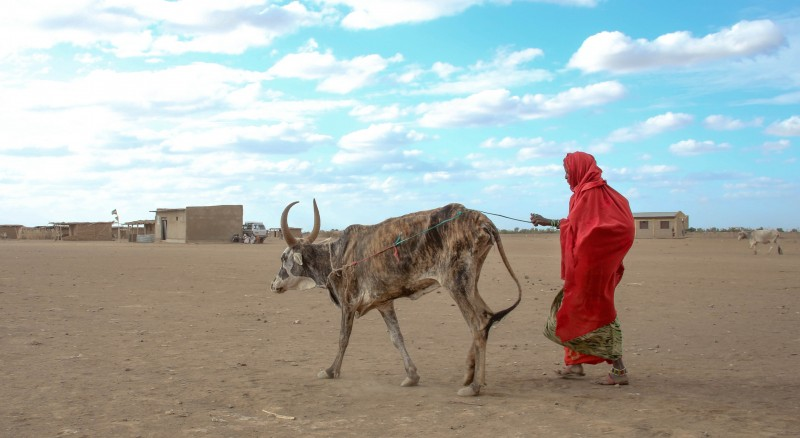 Fatuma has lost 190 sheep and goats and 23 cattle because of the drought. She now has 10 goats and sheep and 2 cattle. (Pic: Abiy Getahun/Oxfam)